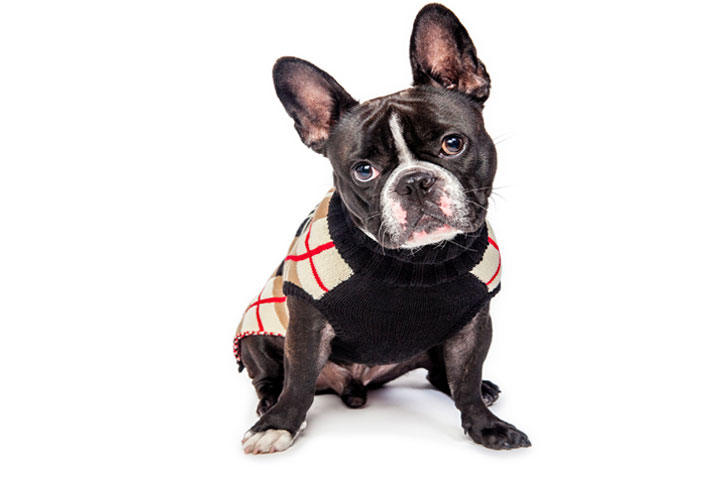 Dog Apparel Company purchase order financing example